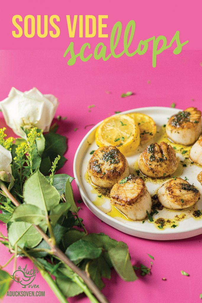 sous vide scallops on a pink background
